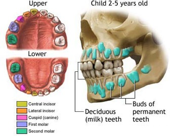 Vấn đề sau khi nhổ răng hàm