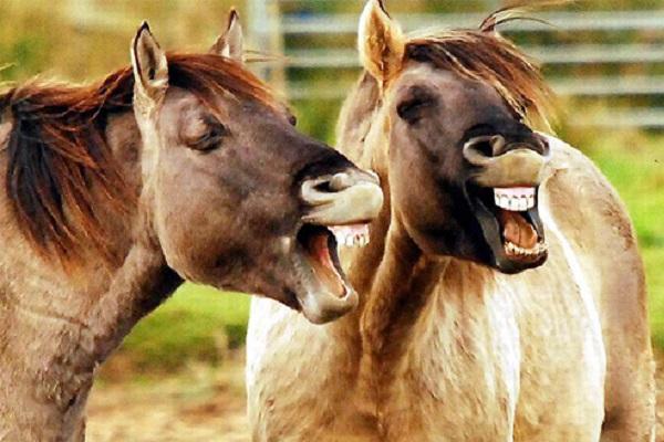 Động vật không hề đánh răng nhưng vì sao răng của chúng luôn tốt hơn con người?